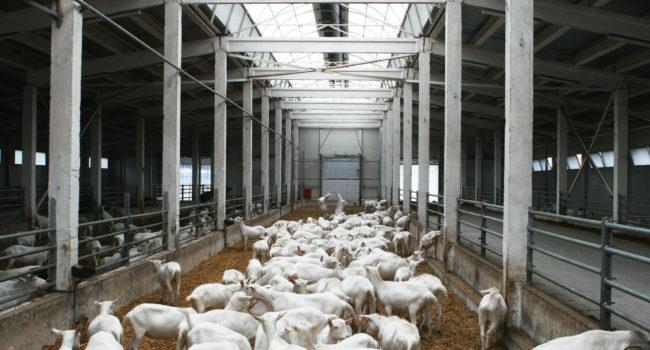 Козья ферма